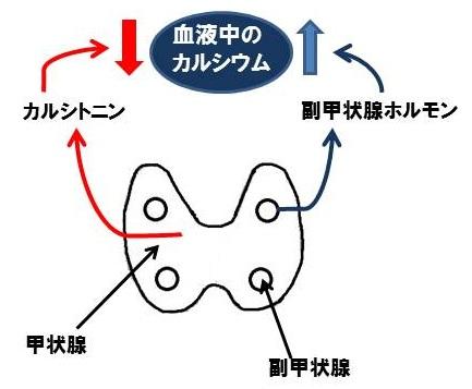 CaPTH.jpg