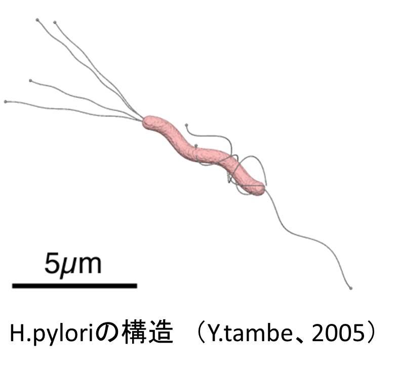 H.pylori.jpg